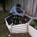 Man planting seedlings